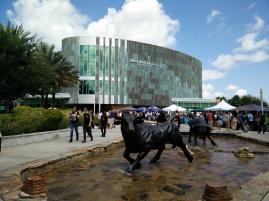 Go Bulls..University of South Florida!!